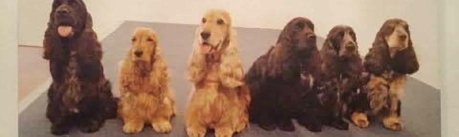 Willkommen Im Cockersalon Dem Hundesalon Speziell Fur English